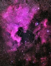 はくちょう座の小オリオン - 安倍奥の星空