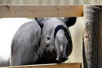 「ヒコボシ」と「オリヒメ」 - 動物園放浪記