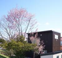 コントラスト - 函館の建築家 『北崎 賢』日々の仕事と遊び