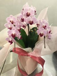 御中元 - ~ Flower Shop D.STYLE ~ (新所沢パルコ・Let's館1F)