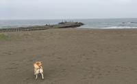《地元訪問レポート》今年もキャンプシーズン到来!inはまます - 柴犬さくら、北国に生きる