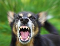 怒ること - みんなが夢中で仕事がしたくなる。そんな会社、いいなと思いませんか?やめない職場づくりのブログ