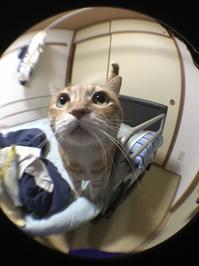 パートナー - いぬ猫フェレット&人間