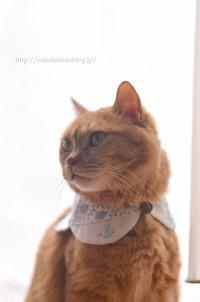 夏の襟とあぺりらHandmade Collar for Cat - お茶の時間にしましょうか-キャロ&ローラのちいさなまいにち- Caroline & Laura's tea break