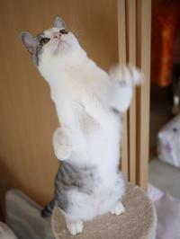 猫のお留守番 ムーくん編。 - ゆきねこ猫家族