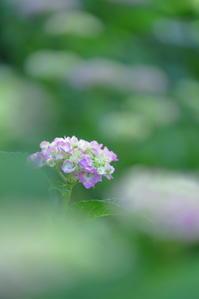 花回廊 - 日記のような写真を