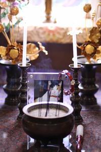 8回目の天の川 - バレトンインストラクターYOKOの「ニャンコとバレトンの日々」~美猫ミケ子との19年&ニャンズ~