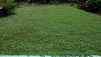 今年3回目のクラピア刈り - うちの庭の備忘録 green's garden