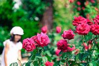 薔薇が咲いた日 - ビール片手に