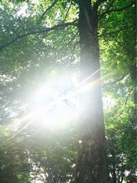 どんどん意識が広がっている✨ - HAWMEA - Well-being Life with this Earth