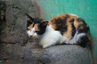 A sleeping calico at the end of a stair - SONGS