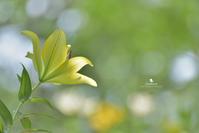 願い - お花びより
