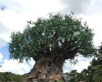 [WDW] アニマルキングダムキリマンジャロ・サファリ(Kilimanjaro Safaris) - Amnet Times