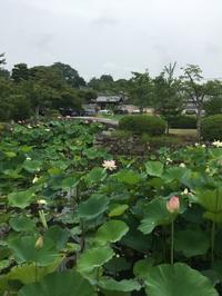 天竜寺の蓮池 - g's style day by day ー京都嵐山から、季節を楽しむ日々をお届けしますー