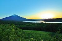 富士八景パノラマ台 - 都忘れと忘れな草