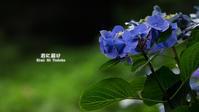 Ajisai Blue Vol.03 - 君に届け