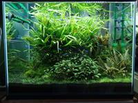 【キューバパールグラス】レグラス60×45水槽のレイアウト変更【初挑戦】 - 癒しのアクアライフ