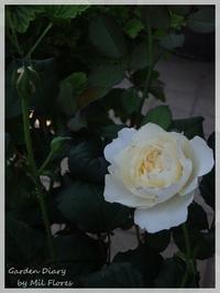Keira - Gardener*s Diary