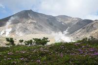 17年北のプー生活(73)…大雪山旭岳姿見平下見 - ふぉっしるもしてみむとてするなり