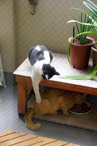 最近の猫事情27 - 鳥会えず猫生活