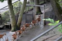 一直線 - 動物園へ行こう