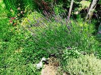 kusaniwa OpenGarden in summer 2017 ー7月15日ー - Healing Garden  ー草庭ー