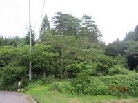 大雨の痕 - 宮迫の! ようこそヤマボウシの森へ