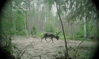 トナカイと犬のサニ - Kippis! from Finland
