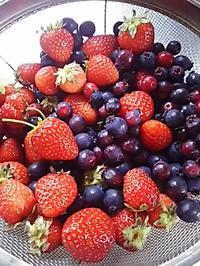 苺とジューンベリー・韓飯のキンパとチゲ - ちゃたろうとゆきまま日記