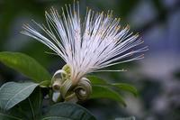 新宿御苑で初めて見た花と、絶滅危惧種の花4種 - 子猫の迷い道Ⅱ