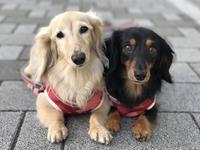 17年7月11日母とうまうまランチ♪ - 旅行犬 さくら 桃子 あんず 日記