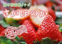 熊本限定栽培品種のイチゴ『熊紅(ゆうべに)』の生産に向け、苗床とハウスの様子を取材してきました!後編 - FLCパートナーズストア