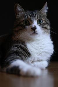Happy  Caturday ★まぐろはヤなの★ - paradise camera