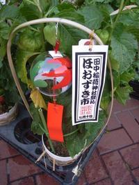田中稲荷神社祭礼 ほおずき市。 - カメラ小僧ぷーちゃんのGRフォトダイアリー。