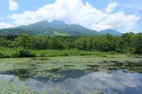 20170711 【自然】いもり池のスイレン - 杉本敏宏のつれづれなるままに