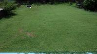 クラピア端切り - うちの庭の備忘録 green's garden