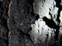 クワガタ樹液採集 2017年 5日目   偶然にも大物が…   part1 - Kuwashinブログ