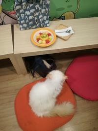 Cat Cafe - soliloquise at Thailand