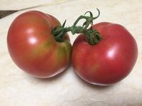 ある日の収穫 - チェロママ日記