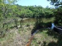 山の中の池へ - 加茂のトンボ (トンボ狂会)