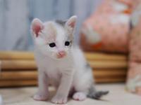 子猫たちみんなお見合いします! - ねこ結び2