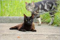 Happy Caturday♪  -駐輪場で- - It's only photo