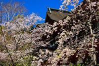 奈良の桜2017 談山神社の春 - 花景色-K.W.C. PhotoBlog
