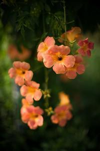 涼しさ皆無、とっても暑苦しい真夏の花 - Soul Eyes