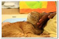 Happy Caturday  ruki - 虹のむこうには何が見える?