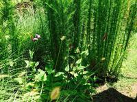 夏のオープンガーデン、ご来園ありがとうございました。 - Healing Garden  ー草庭ー