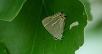 2017ハイシーズン県外遠征その3 - 紀州里山の蝶たち