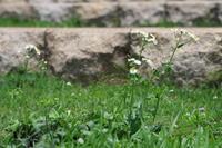 ハルジオンが咲いている。 - 平凡な日々の中で