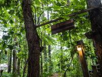 """""""やまぶどう""""のアーチが雨除け、日除けになっています。 - 十勝・中札内村「森の中の日記」~café&宿カンタベリー~"""