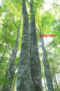 しずかな森 - ジージーライダーの自然彩彩